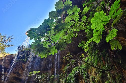Fotografie, Obraz cenote in the ancient city of maya, landscape america maya history