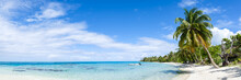 Panoramic View Of A Tropical Beach With Palm Tree
