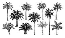 Palm Trees Big Set.