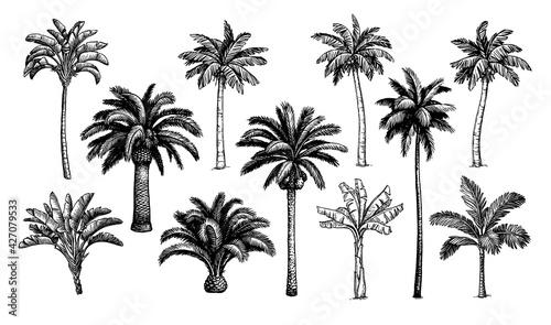 Fotografie, Obraz Palm trees big set.