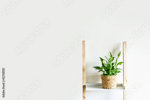 Fototapeta Minimalist home decor, decorative plant, interior background obraz