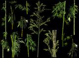 isolated on black set of thirteen green bamboo plants