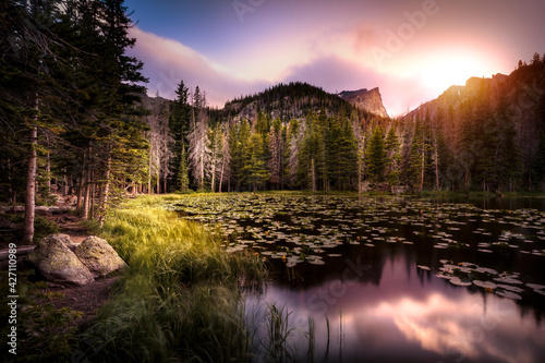 Fotografie, Obraz A lake full of lily-pads in a forest of the Rocky Mountains of Colorado during sunset in the summer