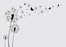 Dandelion With Flying Butterflies And Seeds, Vector Illustration. Vector Isolated Decoration Element From Scattered Silhouettes
