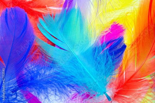 Obraz na plátně Beautiful colorful feather pattern texture background