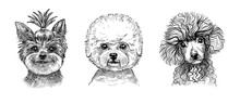 A Set Of Three Portraits Of Cute Puppies Or Dogs. Black And White Sketch In The Style Of Hand-drawn Graphics With A Pen.