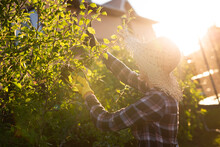Side View Of Joyful Young Caucasian Woman Gardener Cuts Unnecessary Branches And Leaves From A Tree With Pruning Shears While Processing An Apple Tree In The Garden. Gardening And Hobby Concept