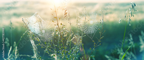 Fotografia beautiful cobwebs in grass
