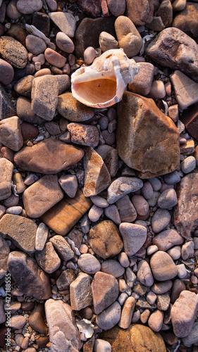 Fotografie, Obraz 바닷가 자갈사이에 있는 소라껍질(A conch shell between the pebbles of the beach)