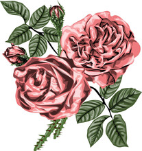 Tea Rose Bouquet  - Vintage Flowers - Pink Roses