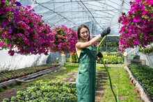 Portrait Of Handsome Woman Gardener Watering Plants And Flowers In Greenhouse