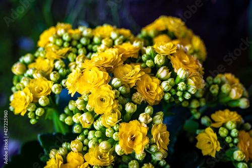 Obraz Kwiaty - fototapety do salonu