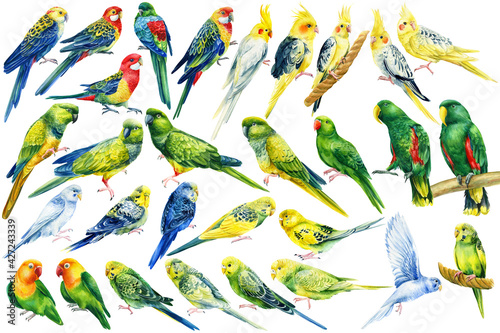 Fotografia Big set of tropical birds, bright parrots on an isolated white background, water