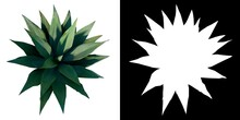 Top View Of Plant ( Agave Maguey 1) Tree Png With Alpha Channel To Cutout Made With 3D Render