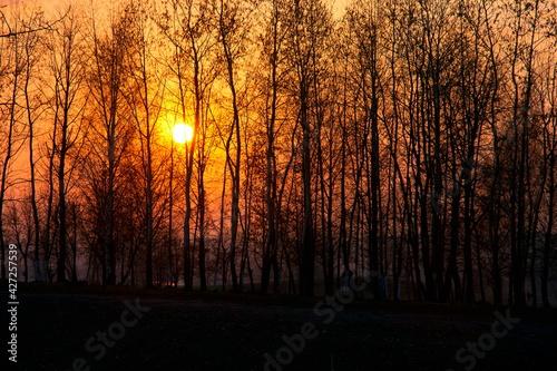Fototapeta Zachód Słońca Sosnowiec obraz