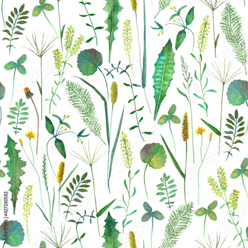 Fototapeta Seamless pattern with wild flowers, herbs, grasses. Watercolor hand drawn botanical illustration obraz