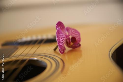 Obraz kwiat Piękna gitara akustyczna gryf drewno struny gitarzysta - fototapety do salonu