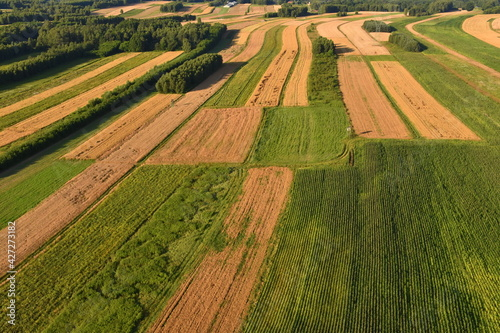 Fototapeta pola, łąki, tereny rolne, uprawa, wiosna  obraz