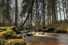 Cascade Falls Over Mossy Rocks In Spring