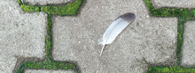 Banner With A Feather Of A Bird Lying On A Path From Paving Slabs