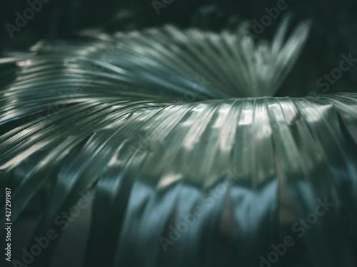 Obraz liście  - fototapety do salonu