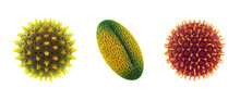 Set Of Microscopic Pollen Grains Isolated On White. Pollen Allergy Is Also Known As Hay Fever Or Allergic Rhinitis.
