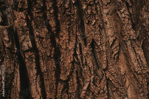 Obraz na plátně Tree bark texture pattern, old maple wood trunk as background