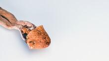 Magic Mushrooms On White Background. Psilocybin Compound Laboratory Research.