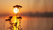 Nature Of A Sunrise