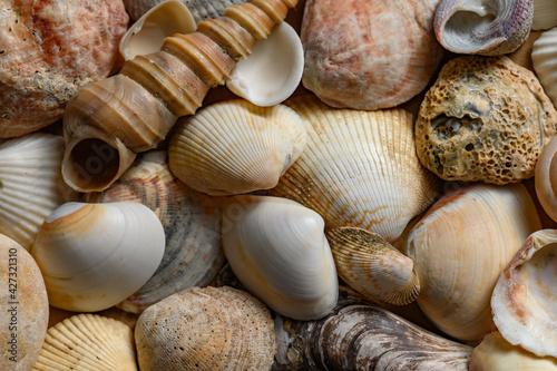 Fotografie, Obraz Seashells of various shapes and types. Background