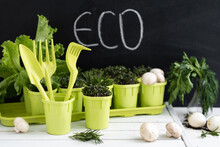 Growing Seedlings And Vegetables Provide Themselves With Products On Their Site. ECO Food. Concept Of Self Isolation During A Pandemic COVID-19. Green And White Flat Lay.