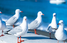 The Close-up Of Sea Gull
