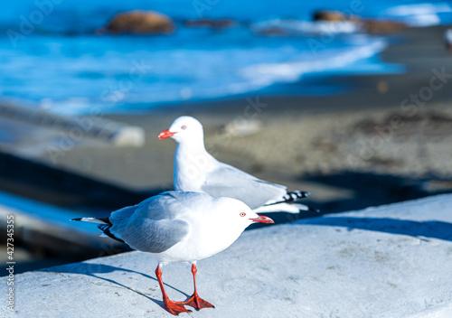 Valokuva The close-up of sea gull