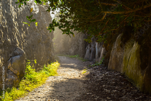 Canvas-taulu path in the forest