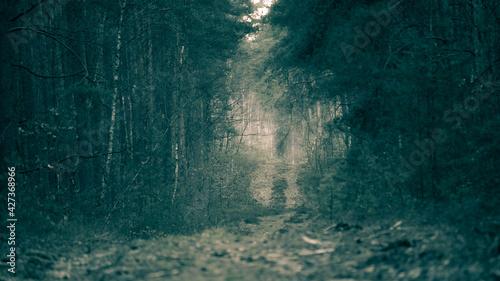Fototapeta background obraz