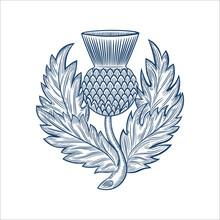 Scottish Thistle Emblem Badge Design, In Hand Drawn Style