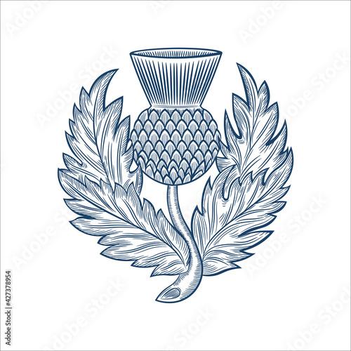 Fotografie, Obraz Scottish thistle emblem badge design, in hand drawn style