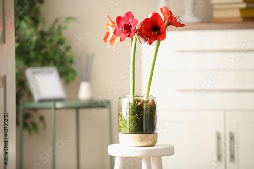 Obraz Beautiful red amaryllis flowers on stool indoors - fototapety do salonu