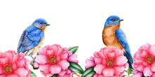 Eastern Bluebirds With Camelia Flowers Illustration. Spring Watercolor Image. Tender Pink Blossoms With Tiny Songbirds. Elegant Spring Lush Border. Camelia Flowers And Birds On White Background