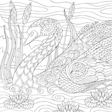 Beautiful Swan Near Waterlily And Cattails. Coloring Book Page For Adult With Zentangle Elements. Vector Outline Art Of Nature With Wild Bird On River.