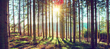 Fototapeta Kuchnia - Beautiful spring forest with bright sunlight in the fog.