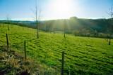 Fototapeta Kuchnia - Spring landscape background with bright sun and green grass field.
