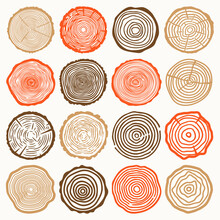 Tree Rings Vector Collection
