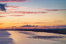 Flock Of Barnacle Geese Standing On Riverbank Of Ems River With Wind Turbines In The Distance, East Frisia, Lower Saxony, Germany