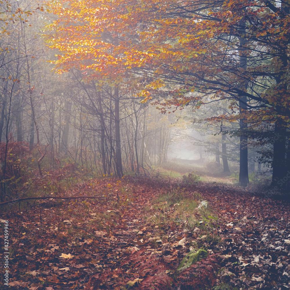 Fototapeta Jesień w Katowicach
