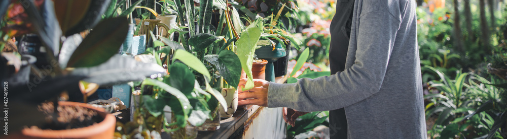 Fototapeta Asian owner woman gardening and working in greenhouse, Small business entrepreneur concept