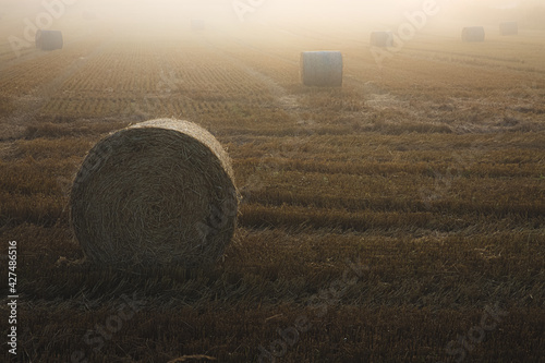 Obraz na plátně Golden sunrise or sunset lght over misty, rural countryside farmland with hay bales scattered across the agricultural field near Kelty and Dunfermline in Scotland, UK