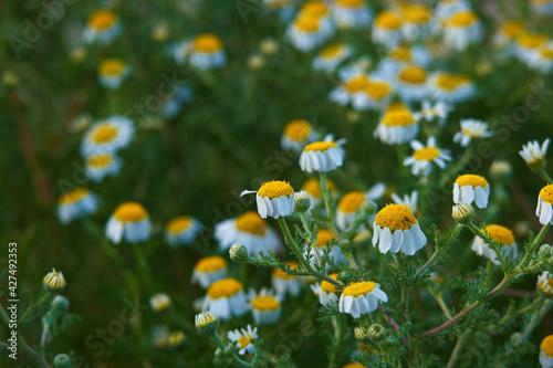 Fototapeta kwiat roślina wiosna natura płatki łąka obraz