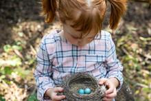 Portrait Of Little Girl Holding Nest Of Robin's Eggs