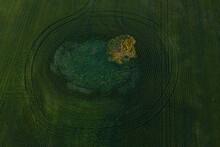Aerial View Of Tree In Farmer's Field